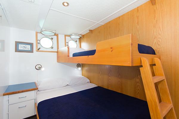 Cachalote Galapagos Yacht - Room